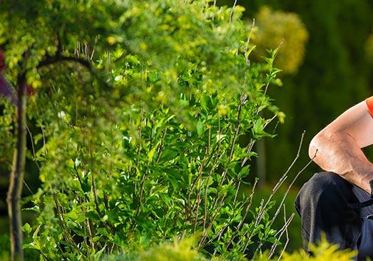 devis gratuit pépiniériste et achat de plantes Fréjus