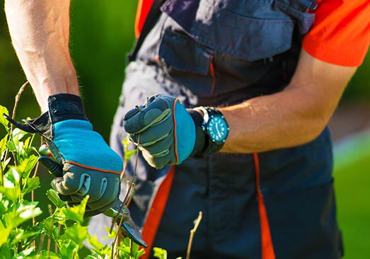 jardinage à Avignon