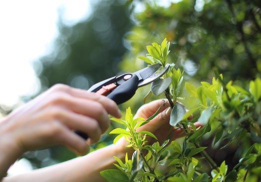 devis gratuit jardinier en Île-de-France